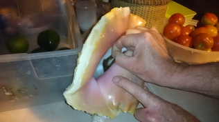 Jim trying to shake hands with a conch