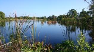 pond in the preserve